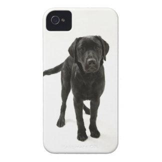 Labrador retriever negro iPhone 4 Case-Mate carcasa