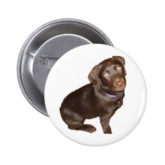 Labrador retriever negro pin