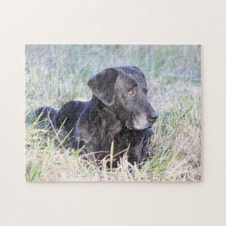 Labrador retriever negro rompecabezas
