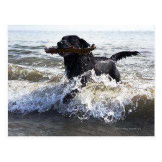 Labrador retriever negro que corre a través de la postal