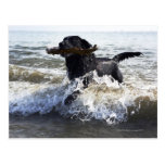 Labrador retriever negro que corre a través de la  tarjeta postal
