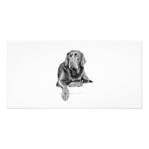 Labrador retriever negro tarjetas fotograficas