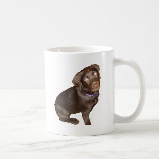 Labrador retriever negro taza