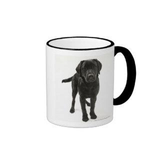 Labrador retriever negro taza de dos colores