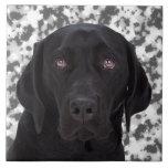 Labrador retriever negro teja cerámica