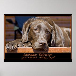 Labrador retriever impresiones