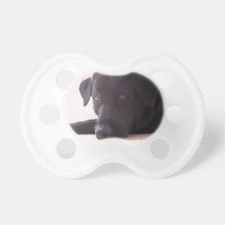 labrador retriever pacifier