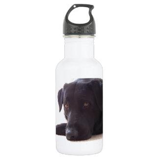 labrador retriever 18oz water bottle