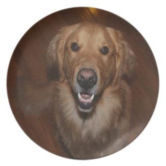 Labrador retriever party plates