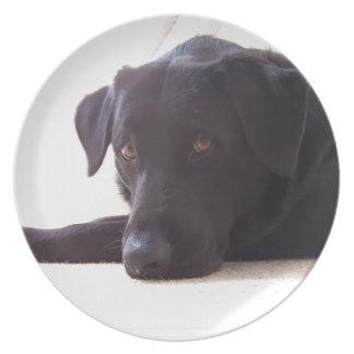 labrador retriever plate