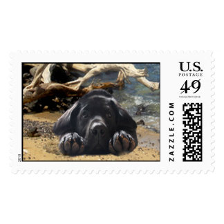 Labrador Retriever Postage Beach