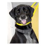 Labrador retriever/postales negros de GermanShorth