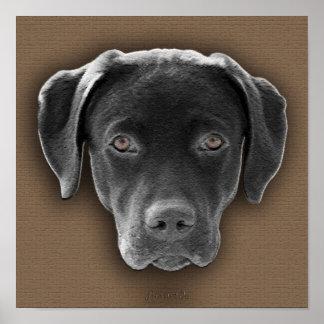 Labrador Retriever póster Posters