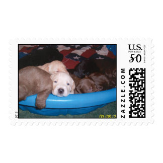 Labrador Retriever Puppies 3-2009 Postage