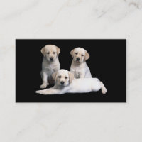 Labrador Retriever  Puppies Business Card