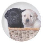 Labrador retriever puppies party plate
