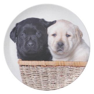 Labrador retriever puppies plate