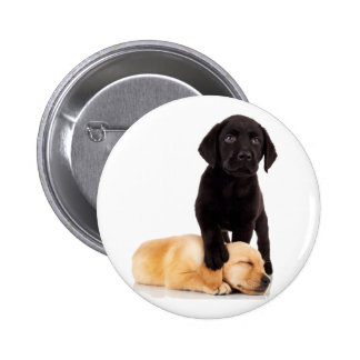 Labrador Retriever Puppies Playing Pins