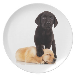 Labrador Retriever Puppies Playing Plates