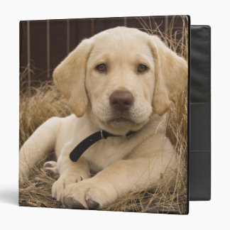Labrador Retriever puppy 3 Ring Binder
