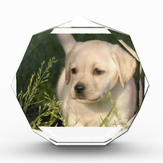 Labrador Retriever Puppy Acrylic Award