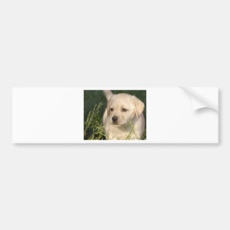 Labrador Retriever Puppy Bumper Sticker