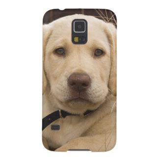 Labrador Retriever puppy Case For Galaxy S5