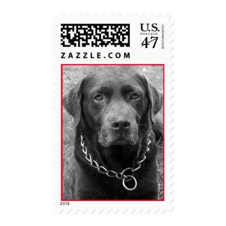 Labrador Retriever Puppy Dog Black And White Postage
