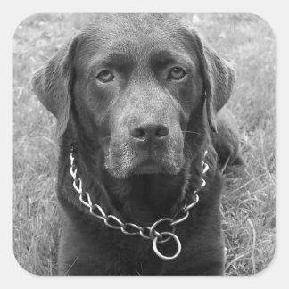 Labrador Retriever Puppy Dog Sticker / Seal