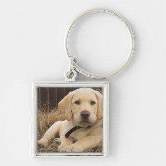 Labrador Retriever puppy Silver-Colored Square Keychain