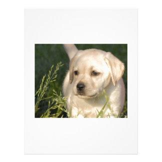 Labrador Retriever Puppy Letterhead