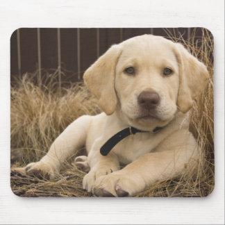 Labrador Retriever puppy Mouse Pad