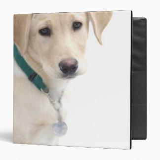 Labrador Retriever Puppy, MR) 3 Ring Binder