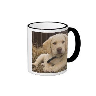 Labrador Retriever puppy Coffee Mugs
