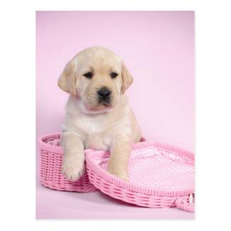 Labrador retriever puppy on pink background postcard