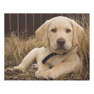 Labrador Retriever puppy Panel Wall Art