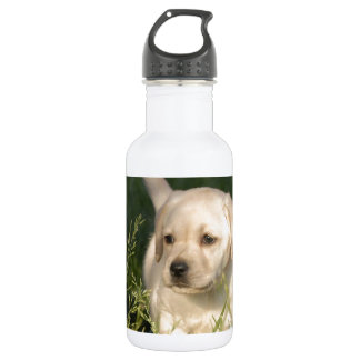 Labrador Retriever Puppy 18oz Water Bottle