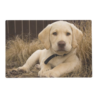 Labrador Retriever puppy Placemat