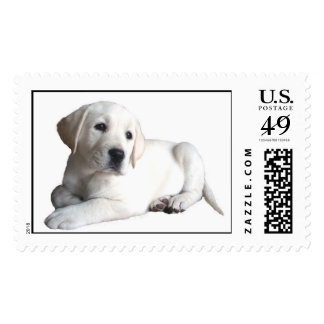 Labrador Retriever Puppy Postage