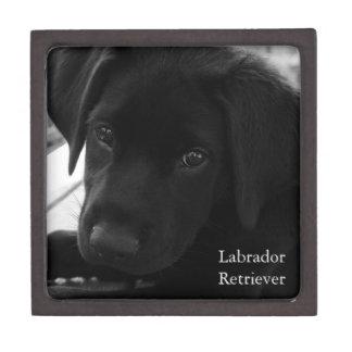 Labrador Retriever Puppy Premium Gift Box