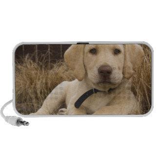 Labrador Retriever puppy iPod Speaker