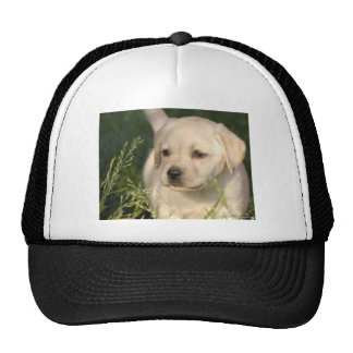 Labrador Retriever Puppy Trucker Hat