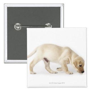 Labrador Retriever Puppy walking Button