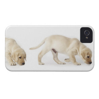 Labrador Retriever Puppy walking iPhone 4 Case