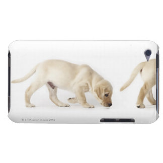 Labrador Retriever Puppy walking iPod Case-Mate Case