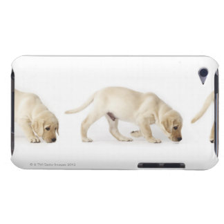 Labrador Retriever Puppy Walking iPod Touch Case