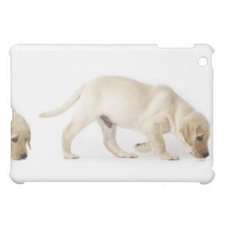 Labrador Retriever Puppy walking, montage iPad Mini Cover