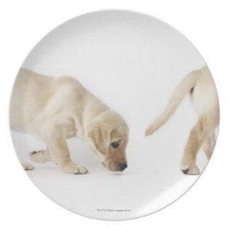 Labrador Retriever Puppy walking, montage Melamine Plate