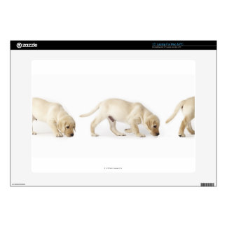 Labrador Retriever Puppy walking Skin For Laptop