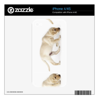 Labrador Retriever Puppy walking Skin For The iPhone 4S